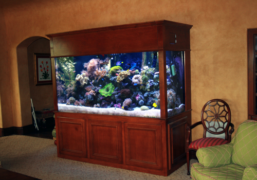 435 Gallon Living Reef Marine Aquarium