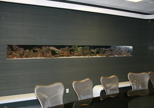 In Wall Living Reef Aquarium