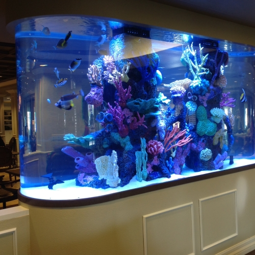 1200 Gallon Race Track With Faux Reef Aquarium