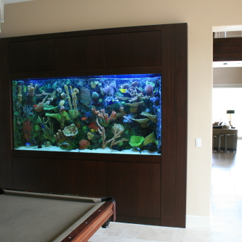 In Wall 600 Gallon With Faux Reef