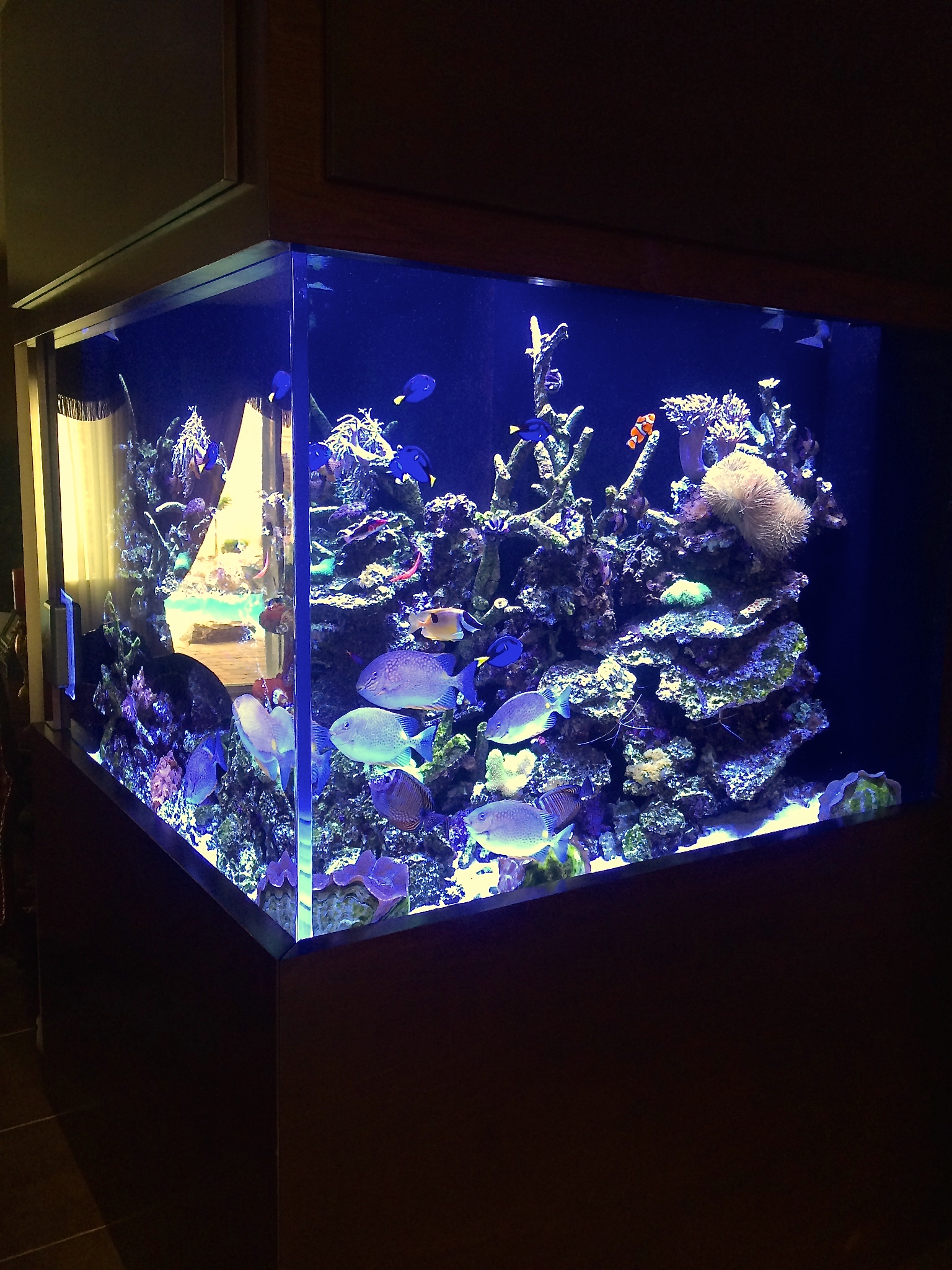 400 gallon living reef aquarium maintenance las vegas for 800 gallon fish tank